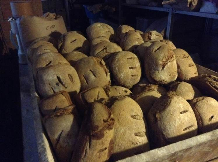 Bread fresh out of the oven