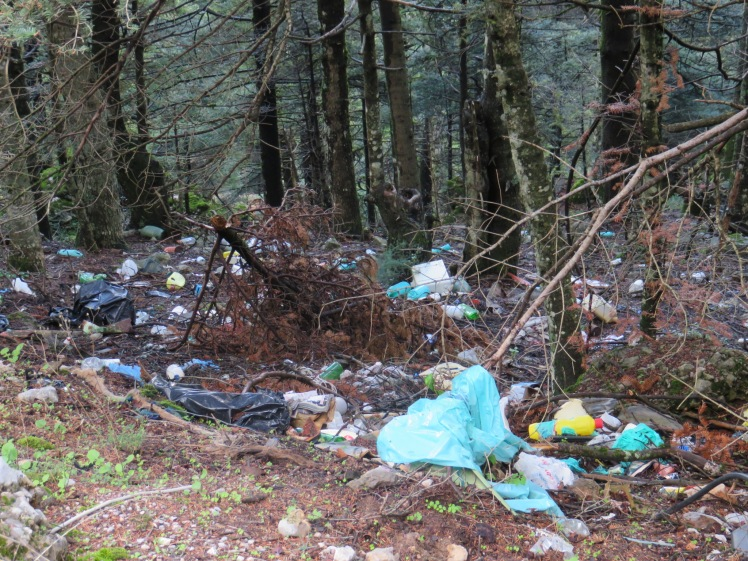 beautiful forest strewn with rubbish
