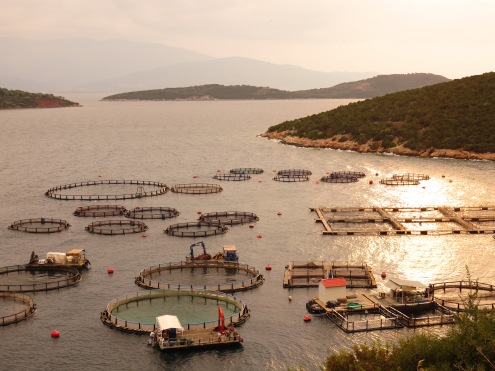 and fish farms