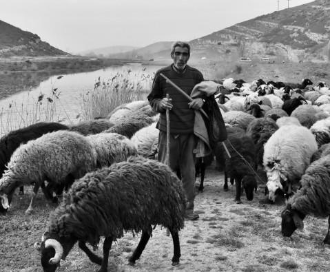 Ali Ali the shepherd