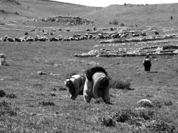 modern and ancient: local ladies collect madimak (a grass used to make soup inside ancient Hattuşaş