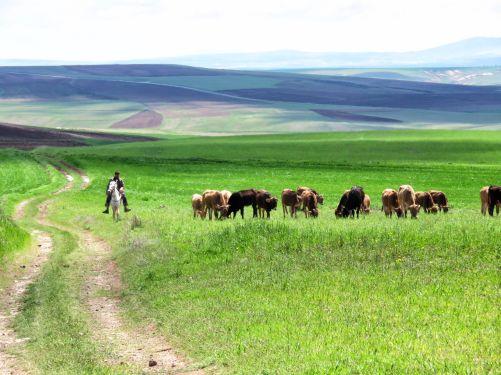 The sheep trails i followed